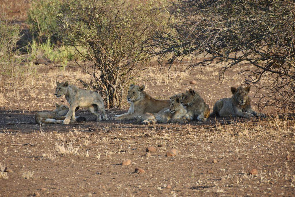 Leoni al Kruger