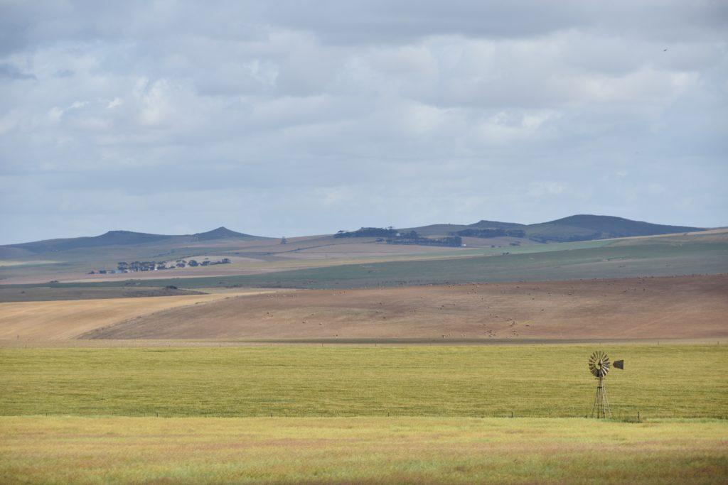 Il veld sudafricano