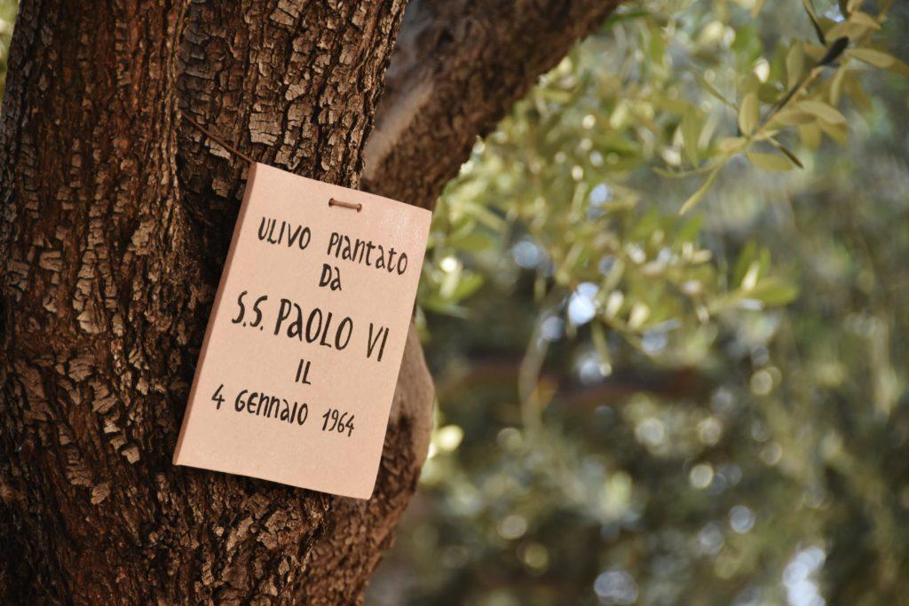Ulivo di Paolo VI nell'orto dei getsemani