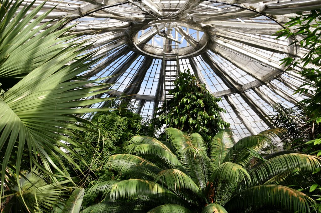 La Palm House dei giardini botanici