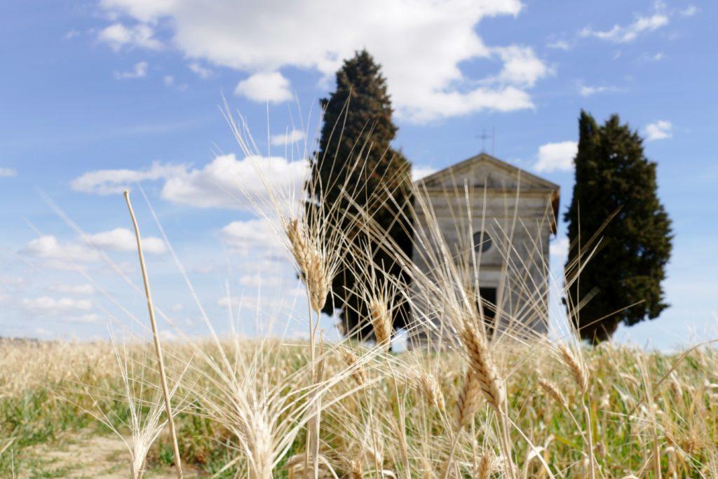 I campi di grano intorno alla Cappella di Vitaleta