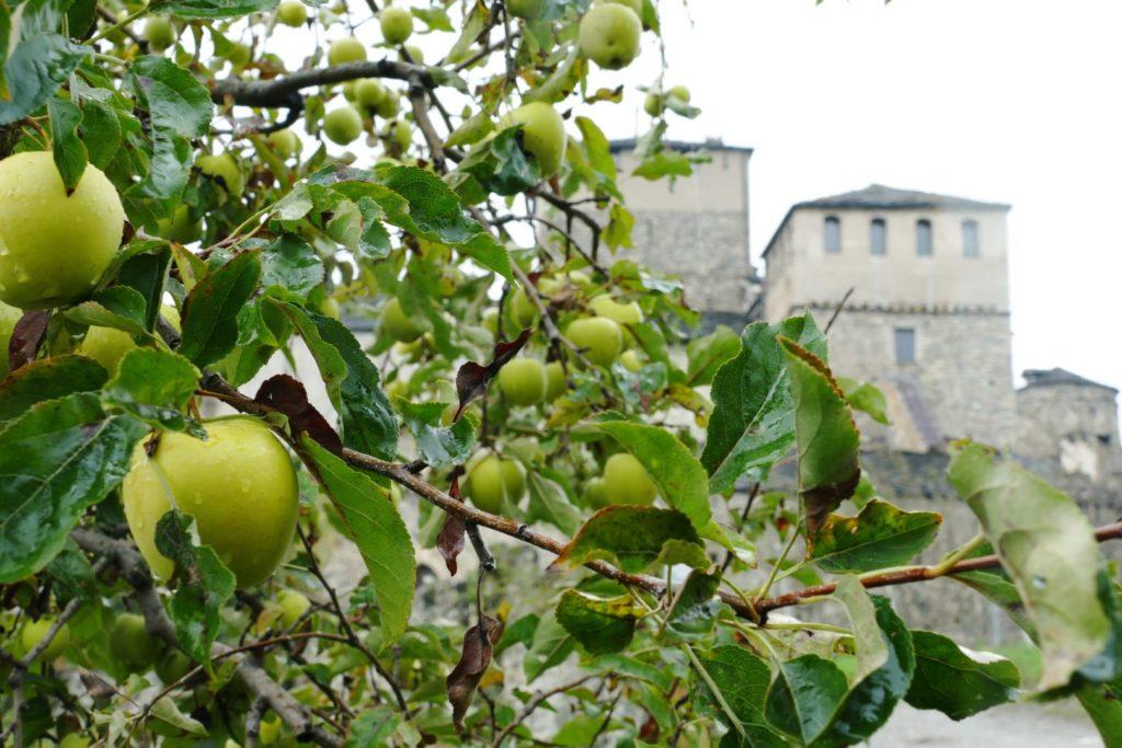 I meleti intorno al Castello di Sarriod de la Tour
