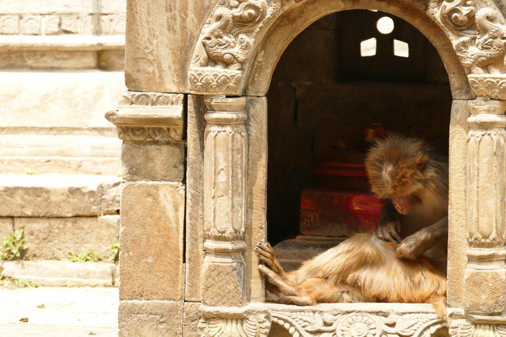 Sciammie al Tempio Pashupatinath