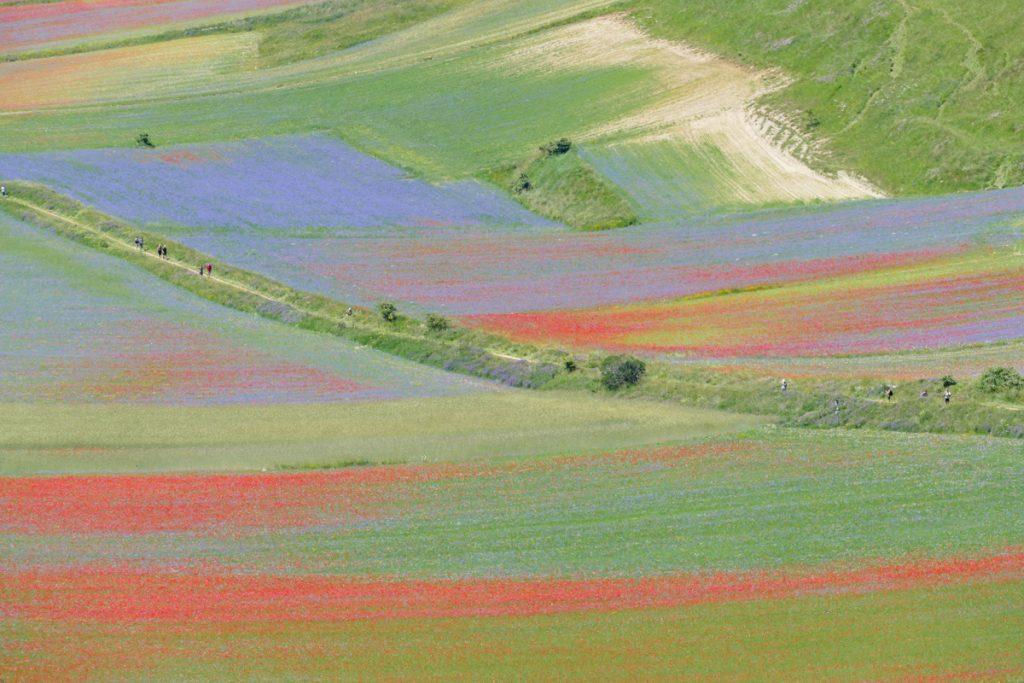 Prati colorati a Castelluccio