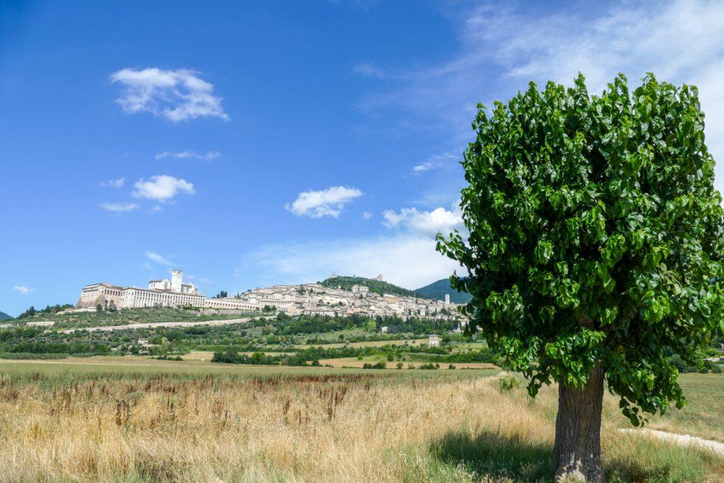 Assisi immersa tra gli uliveti